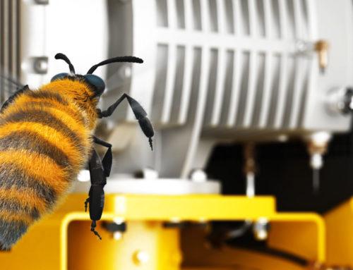 Biene erkundetWeltneuheit